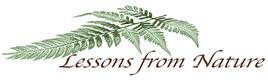 Lessons from Nature logo