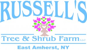 Plant auction by Russells in East Amherst