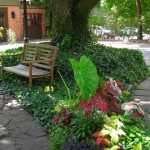 bench and paths in garden on West Ferry Buffalo