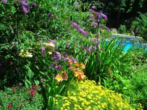 butterfly bush frames pool Lockport garden walk