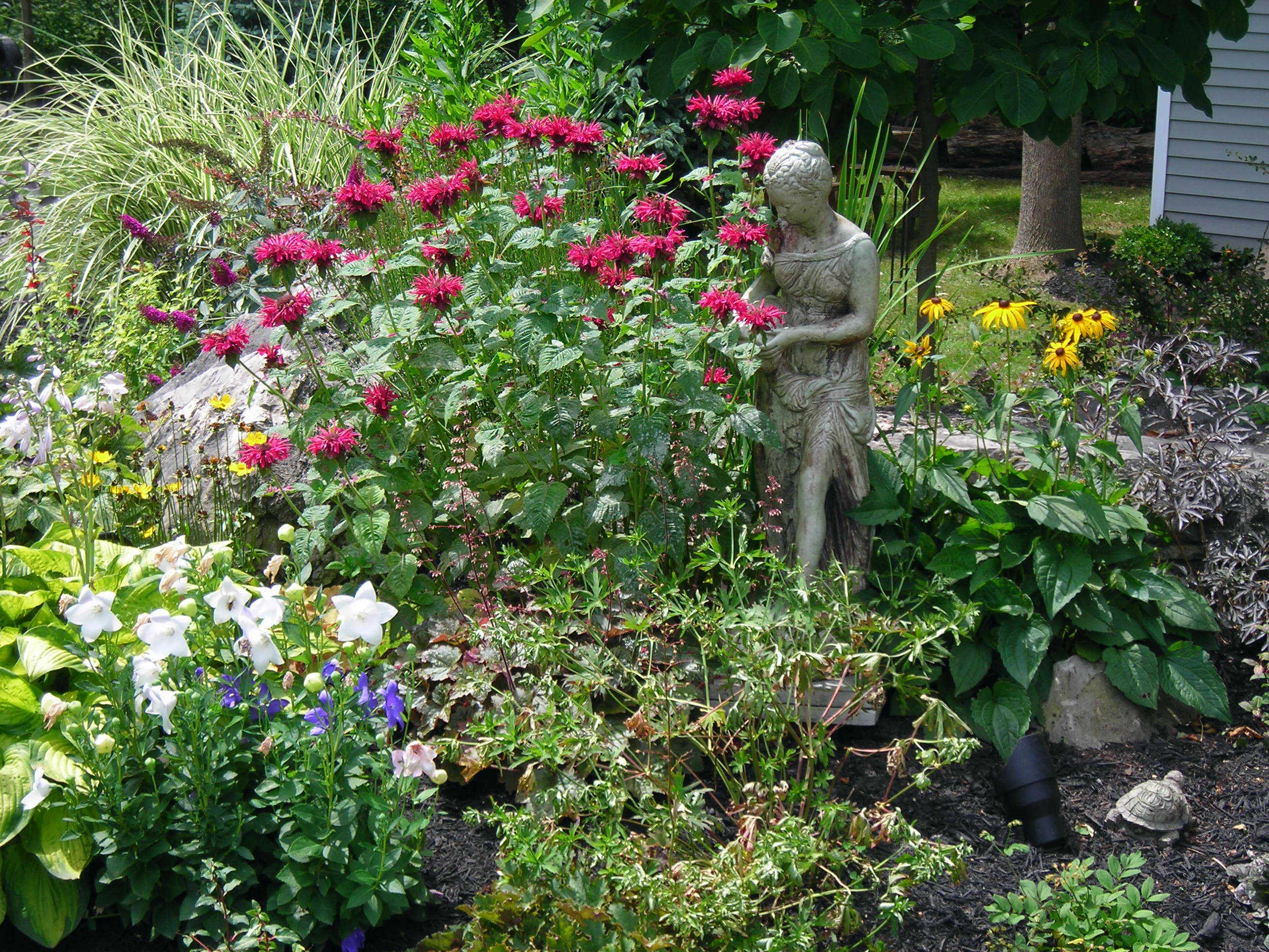 Free Butterfly Garden Ideas Photograph Clarence Butterfly