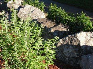 rocks add safety to Eggertsville garden