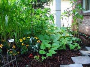 vegetable garden in front yard Amherst
