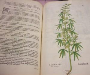 herbal botanical print in Buffalo