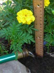 watering garden in Western New York
