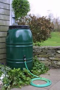 rain barrel for WNY gardens