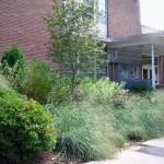rain garden at Crane Library Buffalo