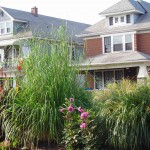 tall grass in median garden in Buffalo NY
