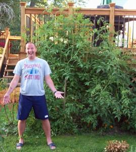 tomatoes organic gardening