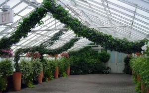 ivy arch at Buffalo & Erie County Botanical Garden