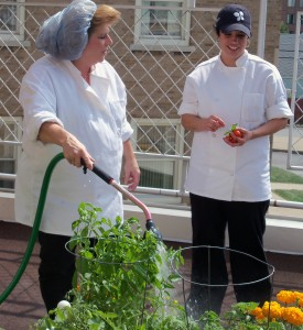 watering herb garden at Kenmore Mercy Hospital