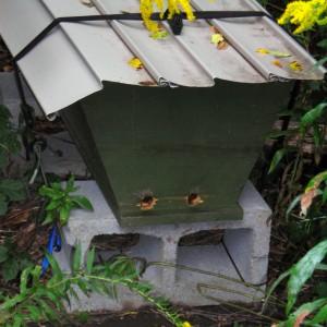 bee hive in Buffalo NY