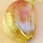 garlic clove grow garlic in Buffalo
