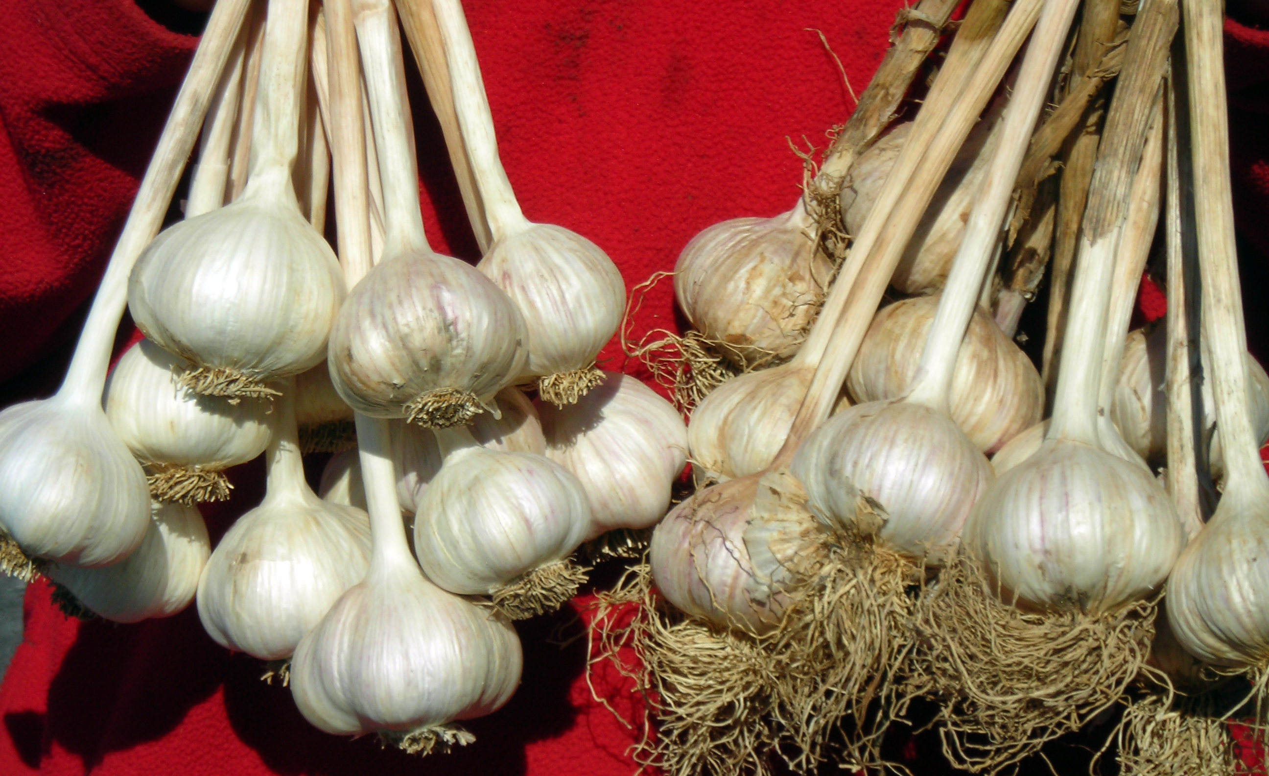 garlic in Buffalo area