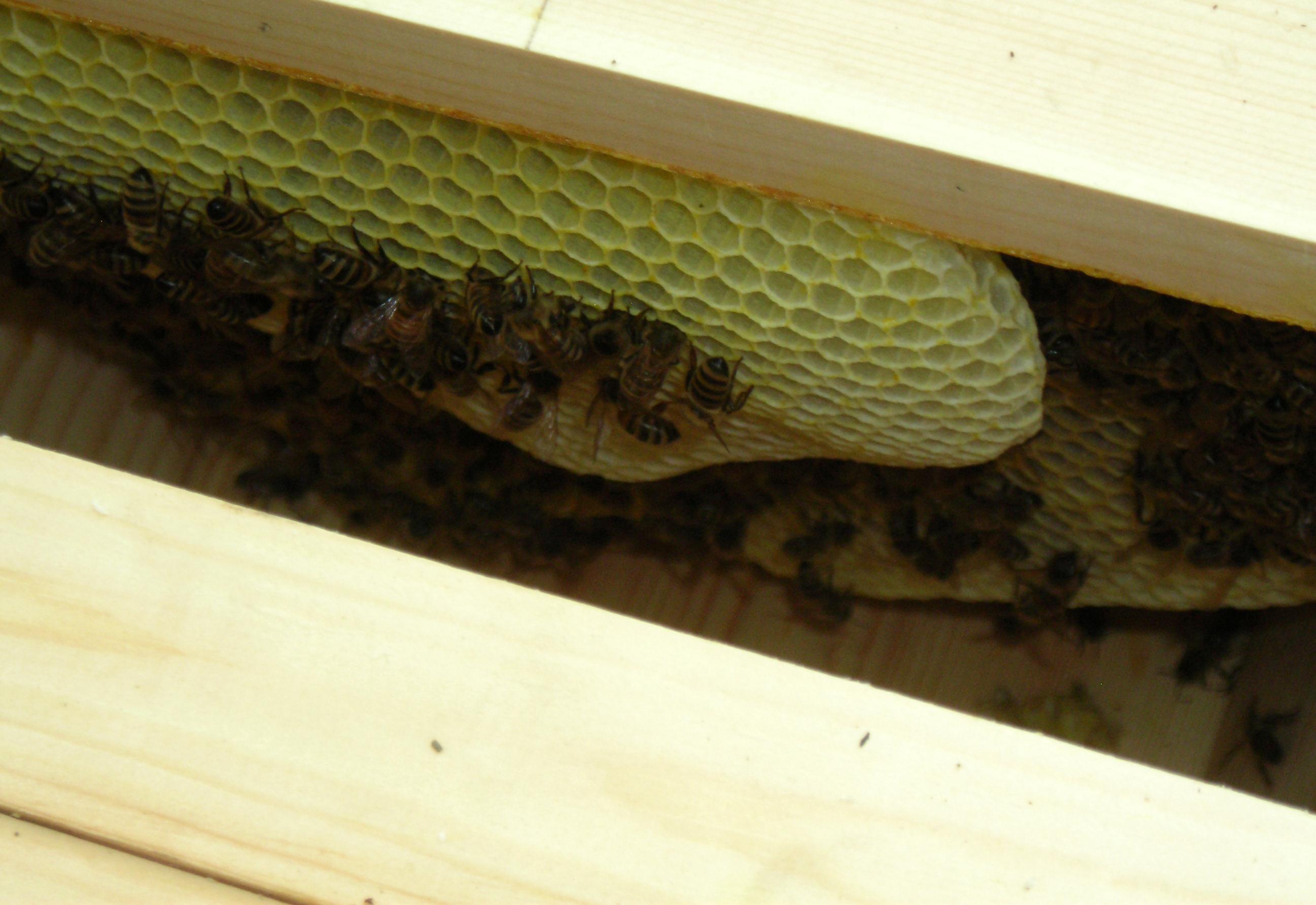 look inside bee hive in Buffalo NY