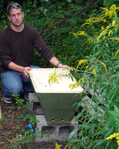 managing bee hive in Buffalo