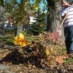 compost for garden in Buffalo NY