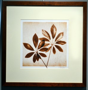 Schefflera Leaves by Michael Mandolfo