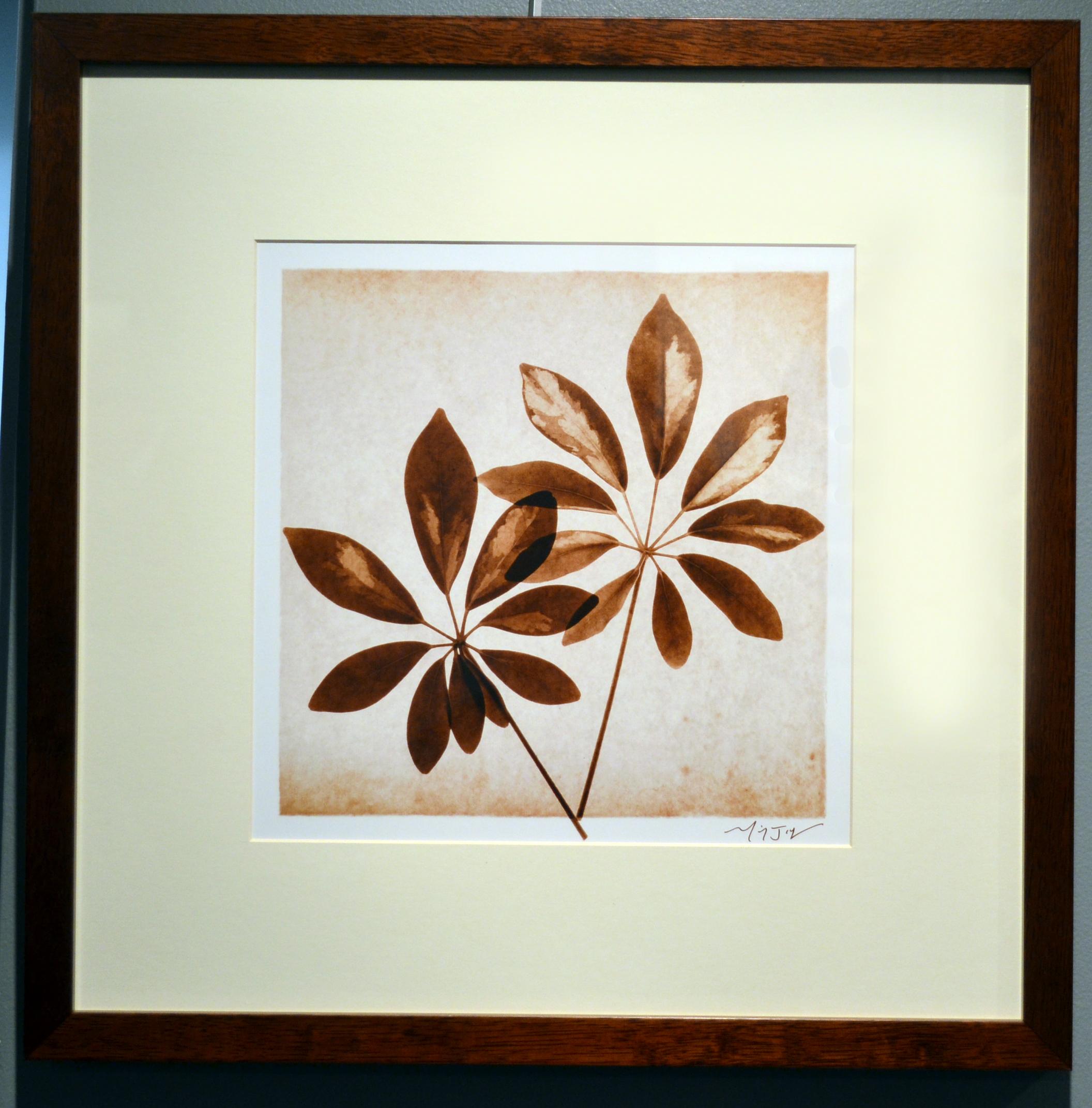 Schefflera Leaves by Michael Mandolfo