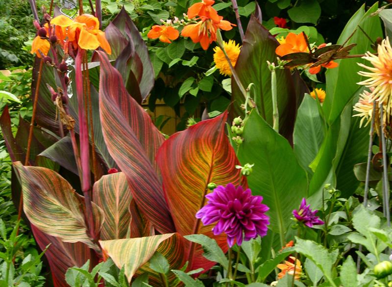 Anne Gareis side garden 2 in Buffalo NY