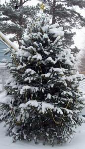Christmas tree outside