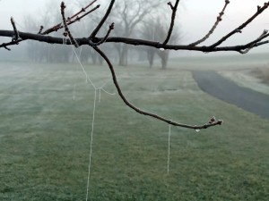 frozen cobwebs