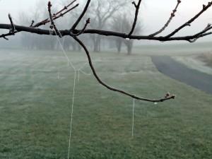 frozen cobwebs