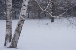 Photo of falling snow by David Bishop