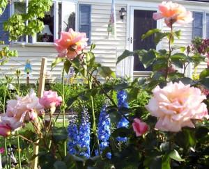 Debbie Hageman roses