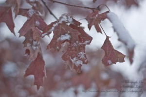 leaves in winter by Natividad Lopez