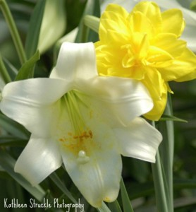 Lilly and her Yellow Sister by Kathleen Struckle