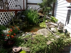 Michelle Schmitt's backyard in Buffalo NY