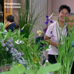 Orchard Park Garden Club perennial exchange