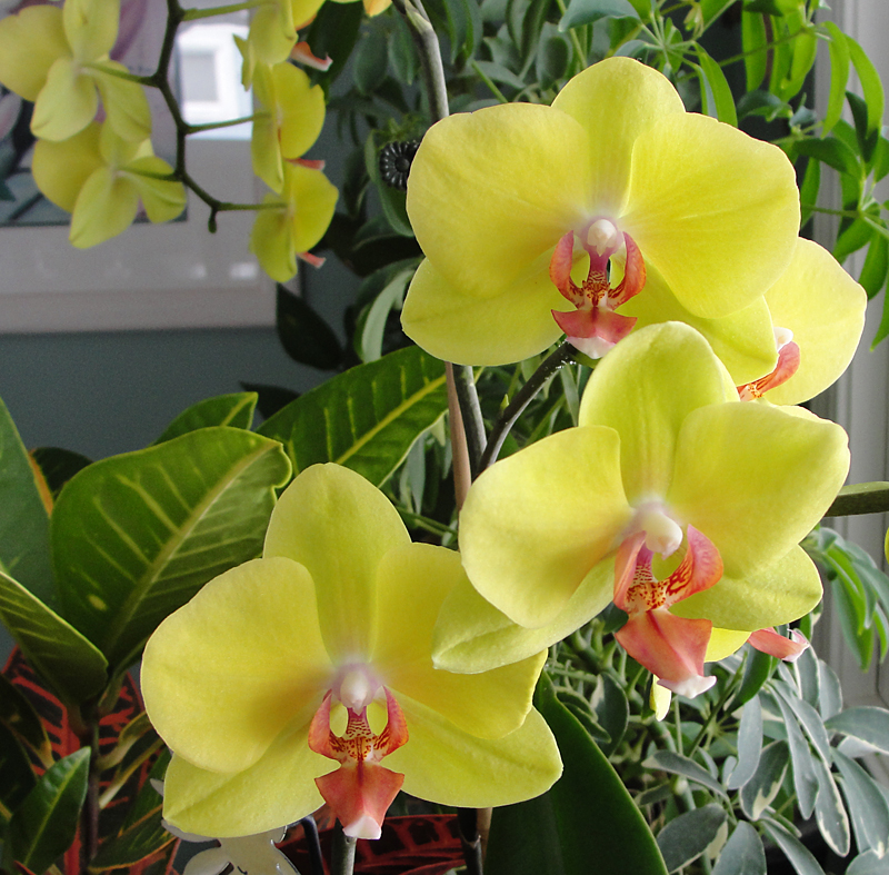 Orchid from Madeline Reigh in Tonawanda New York