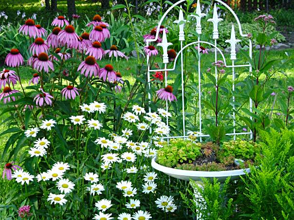 Pat Kluczynski garden in Buffalo NY area