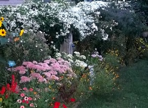 Pulinski autumn clematis on fence in West Seneca