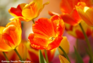 Spring Flower Show by Kathy Struckle