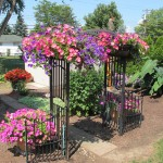 Wave Petunias from Jerry Powarski in West Seneca NY