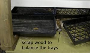 balance 4 trays when starting seedlings in Buffalo