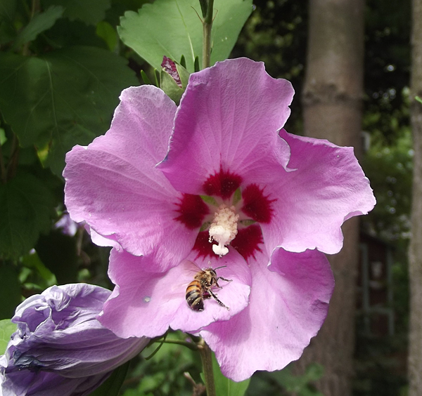 bee from Glenn Krisher in Youngstown NY