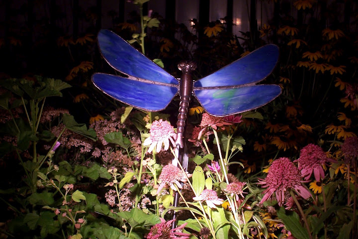 dragon fly at night in Kenmore NY from the Schwabs