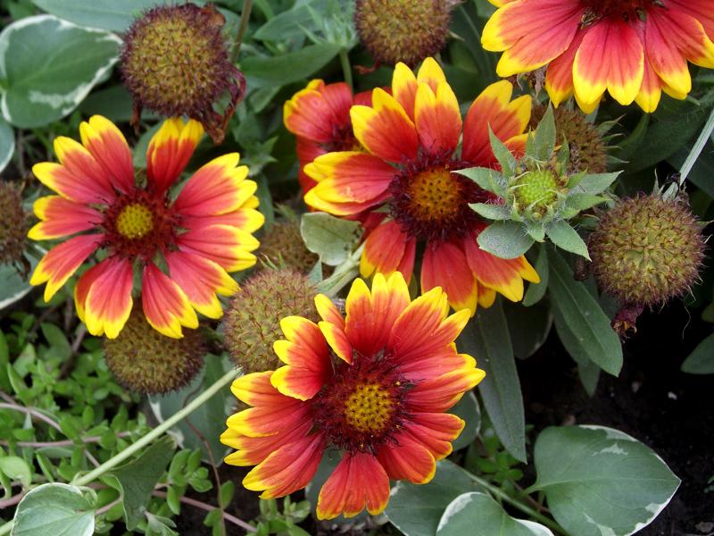 flowers on Riverside Garden Walk Buffalo NY