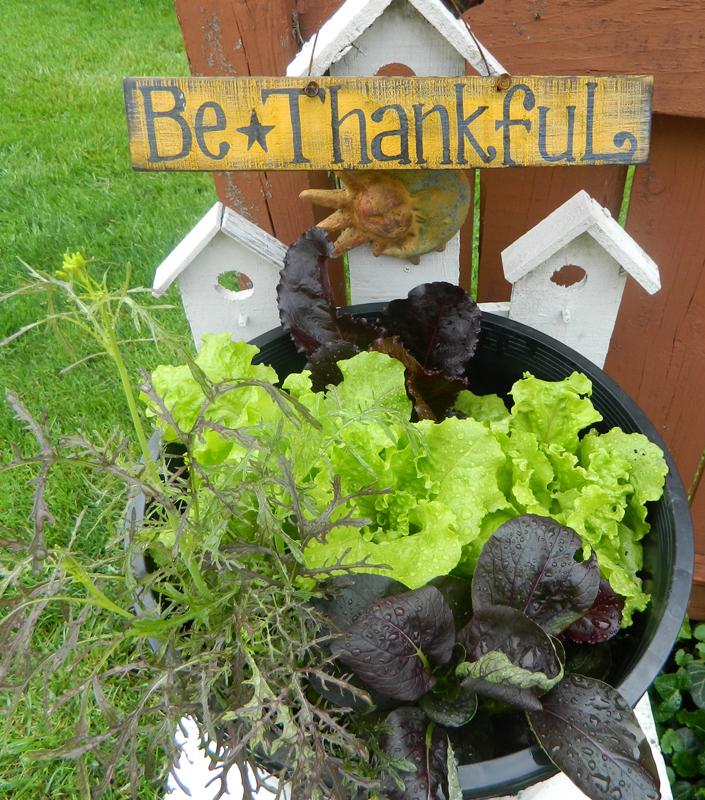 lettuce garden from Alberta Sulik in West Seneca NY
