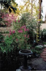 lilac in Buffalo garden
