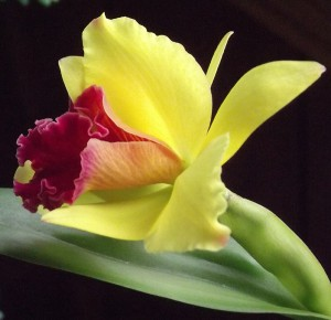 orchid from Tina Schlau