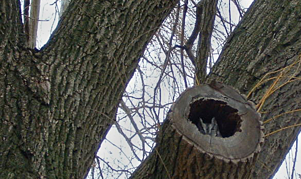 owl in tree from Glenn Krisher in Youngstown NY