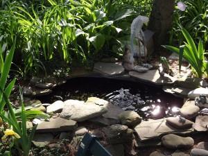 pond from Glenn Krisher