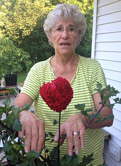 red dahlia flower from Martha Falsone of Williamsville NY