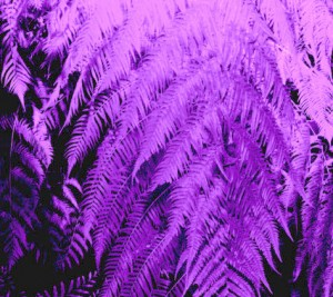 This fern looks feathery in this photo from Night Lights by Kathy Struckle.