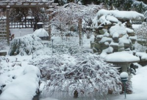 winter garden Jaime Pabilonia